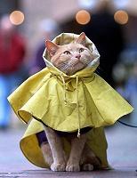 Отдается в дар Кошка в одёжке (размер 42-44)