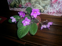 Отдается в дар Цветок