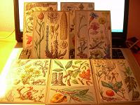 Отдается в дар Познавательные открытки-карточки