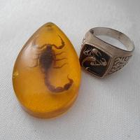 Отдается в дар Находки для скорпионов