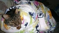 Отдается в дар Кот в мешке в добрые руки