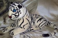 Отдается в дар Тигр альбинос