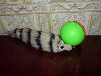Отдается в дар В дар игрушка для животных