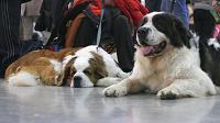 Отдается в дар Уличная фотосъёмка собак