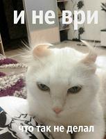 Отдается в дар Разношерстный кот в мешке