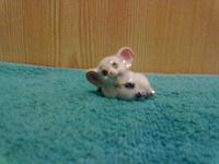 Отдается в дар Мышка.