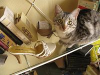 Отдается в дар Туфли от кота