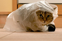 Отдается в дар Кот в мешке :)