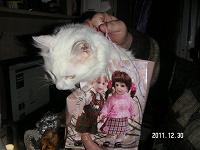 Отдается в дар Кот в мешке г. Москва