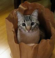 Отдается в дар одежный кот