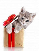 Отдается в дар Кот в мешке!