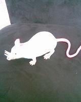 Отдается в дар игрушечная мышь
