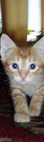 Отдается в дар кот. АКТУАЛЬНО!!!