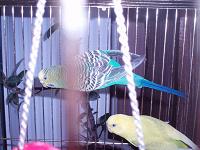 Отдается в дар Попугай