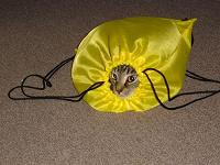 Отдается в дар Кот в мешке — Нумизматический