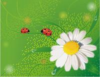 Отдается в дар Ромашки цветки аптечные