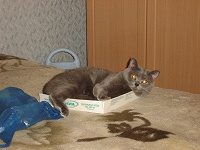 Отдается в дар Кот в мешке (косметический)