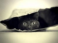 Отдается в дар Кот в мешке (Омский)