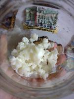 Отдается в дар Тибетский молочный гриб