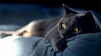 Отдается в дар Кот постельный