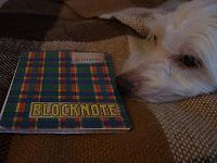 Отдается в дар Блоктотики