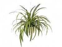 Отдается в дар детки комнатных растений