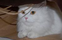 Отдается в дар котик в мешке