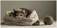 Отдается в дар Кот в мешке рукодельный (девочкам).