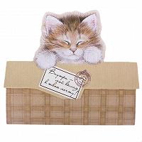 Отдается в дар ПРЕССовый кот — сюрприз из БОН