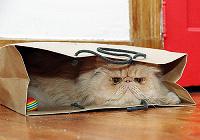 Отдается в дар очередной кот в мешке