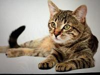Отдается в дар Календарный кот