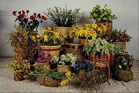 Отдается в дар Новогодний «Дар-желание» для цветоводов)