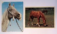 Отдается в дар Раритетные открытки и закладка