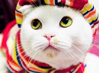 Отдается в дар Сюрприз от кота 500 дар
