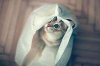 Отдается в дар Одежной котик для мужской половины.