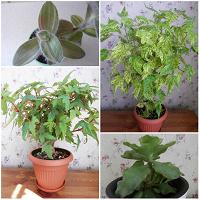 Отдается в дар Черенки разных интересных растений