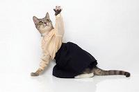 Отдается в дар кот в мешке, скромная женская одежда S\M\L