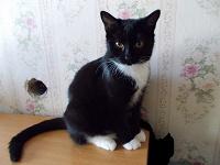 Отдается в дар Кошка живая, черно-белая