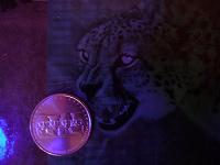 Отдается в дар Монета «Битва за Кавказ»