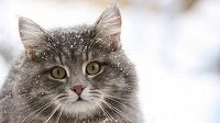 Отдается в дар Кот в мешке (календарики)