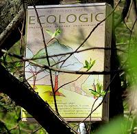 Подарок Ecologic – настольная деловая игра, эколого-экономическая стратегия