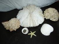 Отдается в дар Раковины, коралл, камни