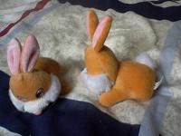 Отдается в дар братцы-кролики