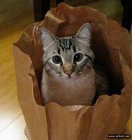 Отдается в дар Кот в мешке(Женская одежда)