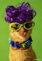 Отдается в дар Уходовый косметический кот!