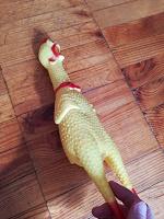 Отдается в дар Резиновая курица (игрушка для собаки)