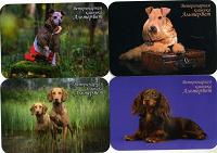 Отдается в дар карманные календарики.собаки.