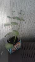 Отдается в дар Любителям комнатных растений