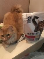 Отдается в дар Корм кошачий
