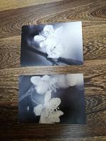 Отдается в дар Крупные открытки 3 шт